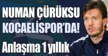 Numan Çürüksu 1 yıllığına Kocaelispor'da!